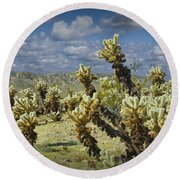 Cactus Also Called Teddy Bear Cholla Round Beach Towel