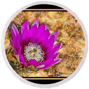 Cactus Flower 4 Round Beach Towel