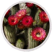 Cactus With Red Flowers Round Beach Towel