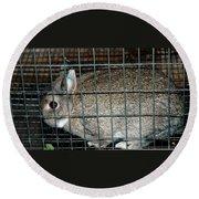 Caged Rabbit Round Beach Towel