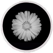 Calendula Flower - Black And White Round Beach Towel