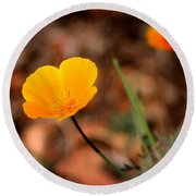 California Poppy Round Beach Towel