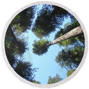 California Redwood Trees Fine Art Prints Forest Round Beach Towel