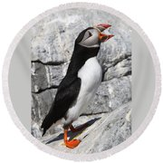 Call Of The Puffin Round Beach Towel