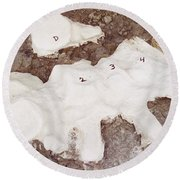 Camarasaurus Vertebrae Covered Round Beach Towel