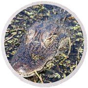 Camouflaged Gator Round Beach Towel by Carol Groenen