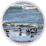 Canada Geese In Lake Erie Round Beach Towel