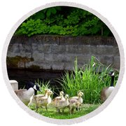 Canada Geese With Goslings Round Beach Towel