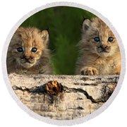 Canadian Lynx Kittens Looking Round Beach Towel