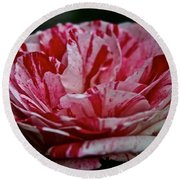 Candy Cane Rose Round Beach Towel