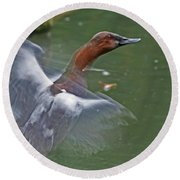 Canvasback In Action Round Beach Towel