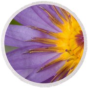 Cape Blue Waterlily Nymphaea Capensis Round Beach Towel
