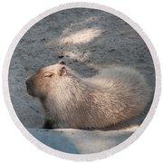 Capybara Round Beach Towel