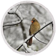 Cardinal Female 3652 Round Beach Towel