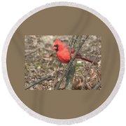Cardinal In A Bush Round Beach Towel