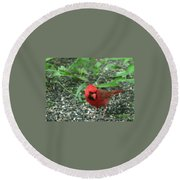 Cardinal In Springtime Round Beach Towel