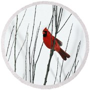 Cardinal In Willow  Round Beach Towel