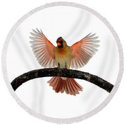 Cardinal Landing On Handle Round Beach Towel