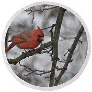 Cardinal Male 3666 Round Beach Towel