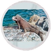 Caribbean Iguana Round Beach Towel