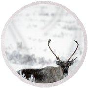 Caribou Rangifer Tarandus Dempster Round Beach Towel