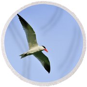 Caspian Tern Round Beach Towel
