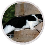 Cat Looking Thru The Knot Hole Round Beach Towel
