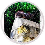 Cat On Medieval Wall Round Beach Towel