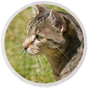 Cat Portrait On A Green Lawn Round Beach Towel