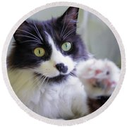 Cat Reaches For Camera Round Beach Towel