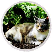 Cat Relaxing In Garden Round Beach Towel