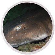 Cat Shark Sleeping, Pulau Tioman Round Beach Towel