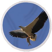 Catch Of The Day - White-bellied Sea-eagle Round Beach Towel