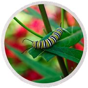 Caterpillar Before The Butterfly 1 Round Beach Towel