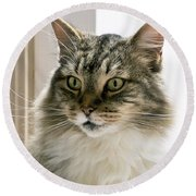 Cats Are Magical Round Beach Towel
