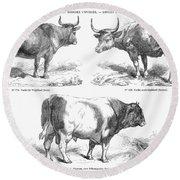 Cattle Breeds, 1856 Round Beach Towel