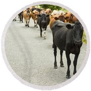 Cattle Drive On A Road  Round Beach Towel