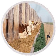 Cattle Feeding Round Beach Towel