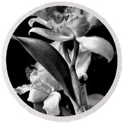 Cattleya - Bw Round Beach Towel
