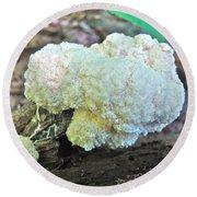 Cauliflower Mushroom On Log Round Beach Towel
