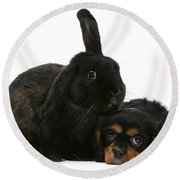 Cavalier King Charles Spaniel And Rabbit Round Beach Towel
