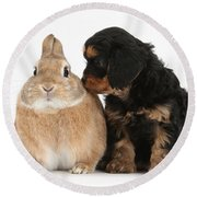 Cavapoo Pup And Sandy Netherland-cross Round Beach Towel