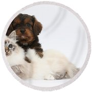 Cavapoo Pup And Tabby-point Birman Cat Round Beach Towel