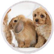 Cavapoo Pup, Rabbit And Ginger Kitten Round Beach Towel