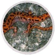 Cave Salamander Round Beach Towel