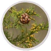 Cedar Rust Gall - Gymnosporangium Juniperi-virginianae Round Beach Towel
