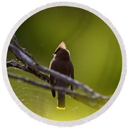 Cedar Waxwing Perched In Tree Round Beach Towel