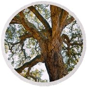 Centenarian Cork Tree Round Beach Towel