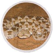 Cerastes Cerastes Horned Viper Round Beach Towel
