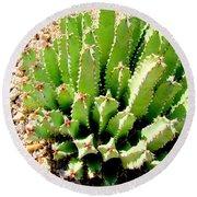 Cereus Peruvianis Cactus Round Beach Towel
